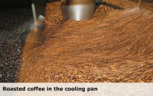Roasted coffee in the cooling pan
